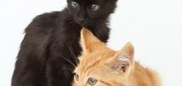 Animali abbandonati: nuovi casi