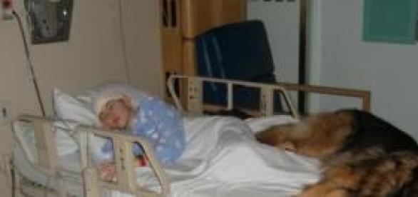 Zooterapia en enfermos terminales