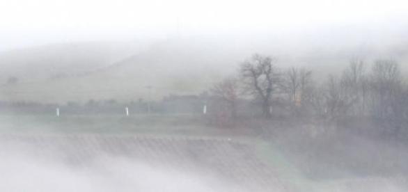 Fog around Col des Laborouns, Beaujolais, France.
