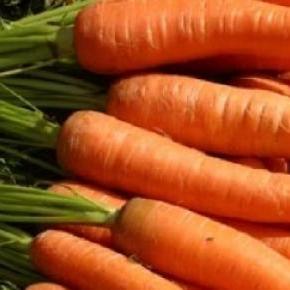 Alimentos funcionales para bien de la salud
