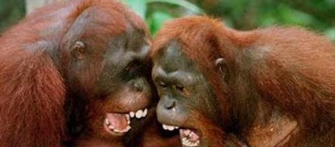 un primate gozara de libertad tras ser juzgado