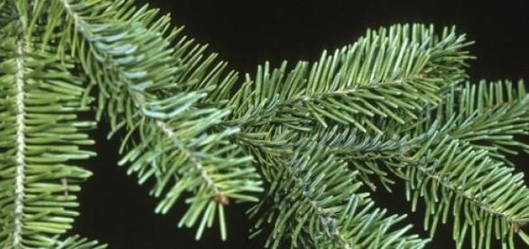 Les infos insolites de la semaine de Noël