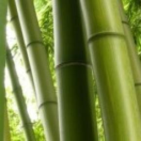 Investimenti agricoli dei giovani imprenditori le nuove for Vendita piante bambu gigante