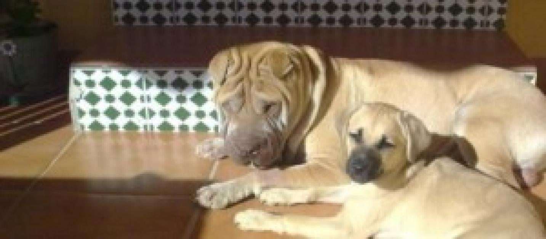 Los perros se peen y mucho - Es malo banar mucho a los perros ...