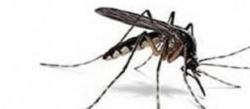Rimedi naturali contro le zanzare e le loro punture trappole in bottiglia altri consigli - Rimedi contro le zanzare in giardino ...