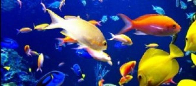 Bonita agrupación de peces tropicales