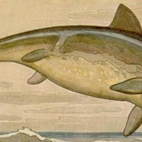 Los ictiosaurios eran veloces cazadores marinos