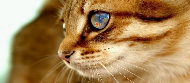 Imagine pentru Masa pisica eroina