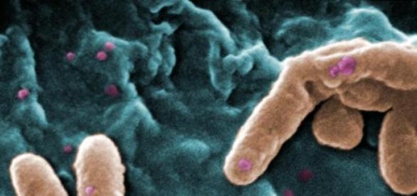 Microorganismos son esenciales para la vida