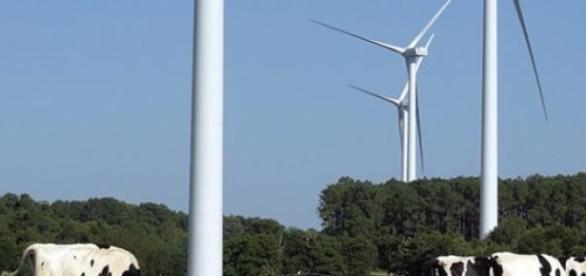 L'Uruguay combine l'élevage et les parcs éoliens.