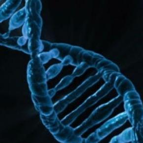 Se trata de una ambiciosa investigación genética