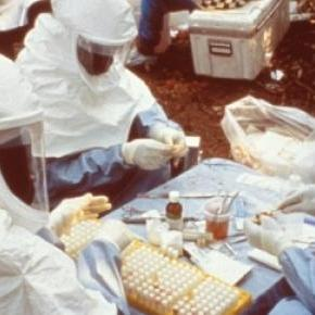 As mutações foram verificadas em sangue infectado.