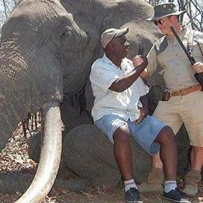 "Giant elephant killed ""for fun"""