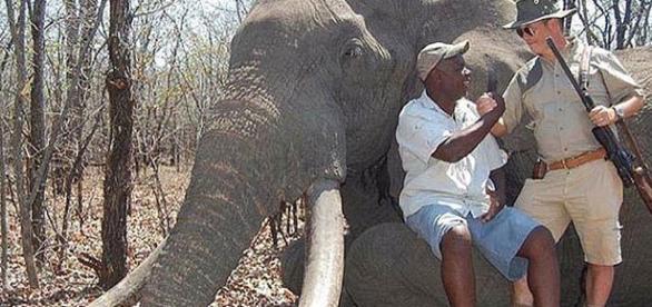 "Giant elephant killed ""for fun"""