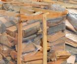 Tăierile ilegale de lemn o problemă