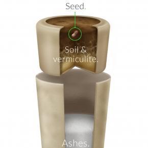 Ekologiczna urna/ źródło: www.urnabios.com