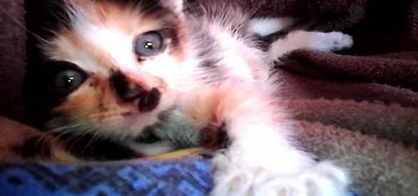 O pisica a fost salvata de un motociclist