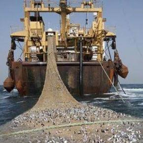 Fishing boats are like small factories.