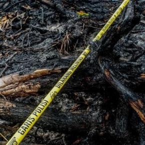 scena del crimine: foresta indonesiana