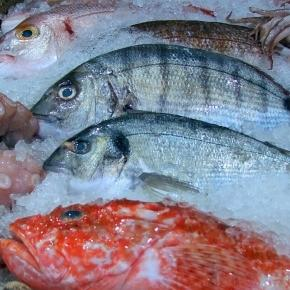 Popular fish fillets that have absorbed mercury and are for Why do fish have mercury