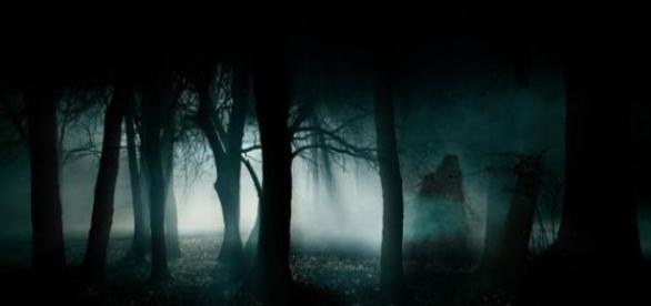 Paranormal phenomena in Horia Baciu forest