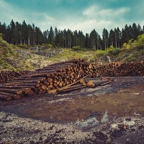 Deforestation is like a plague
