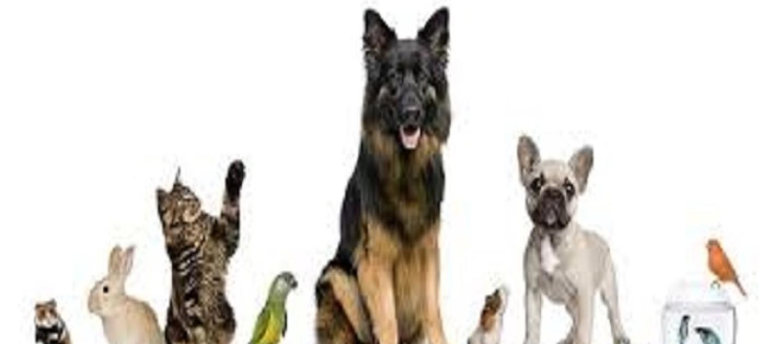 Animali domestici il divieto di pignorarli diventa legge for Rivista di programmi domestici