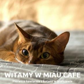 Pierwsza w Warszawie kawiarnia z kotami