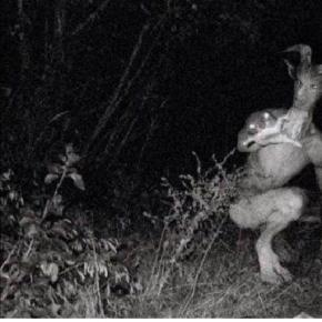 Omul Capră, o creatură înfricoșătoare