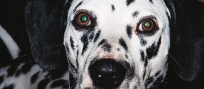 El estudio se realizó con 11 perros distintos