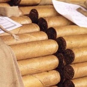 Le cigare, objet de toutes les convoitises.