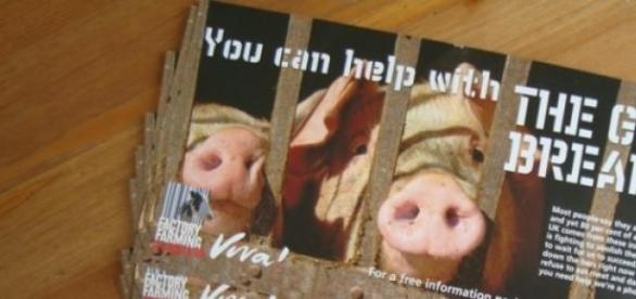 Boycott Halal meat - promote animal welfare