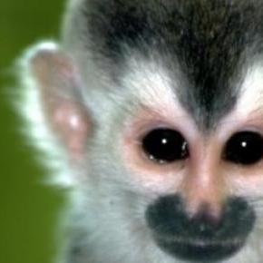 Llegada de los monos a sudamérica es un misterio