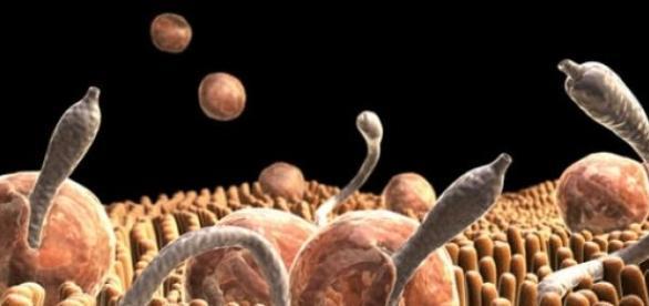 Existen parásitos de tipos muy variados
