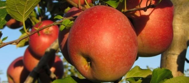 Weniger Pestizide, besseres Obst und Gemüse.