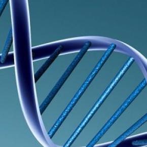 Es un extraño fenómeno genético a nivel horizontal
