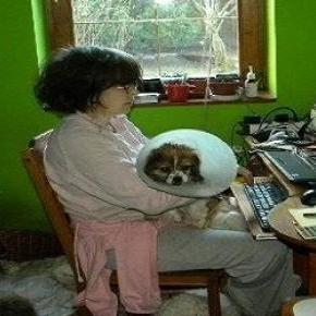 """Fotó: """"Állat és Ember"""" Állatvédő Egyesület"""