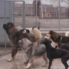 Nettoyage massif de chiens errants