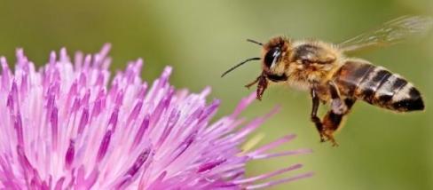 A méhek nélkül más lenne az élet a Földön