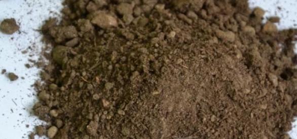 komposztból származó talaj