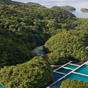 Insula Palau din Oceanul Pacific