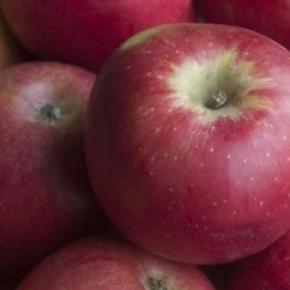 Apple variety grown in Niğde Province, Turkey