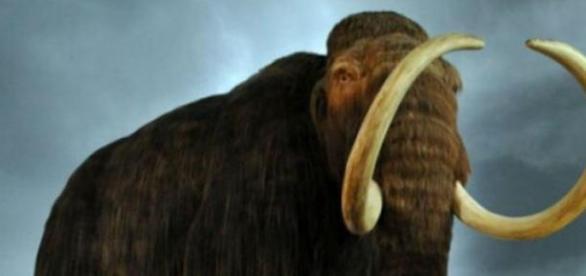 Es otra hipótesis de la extinción de los mamuts