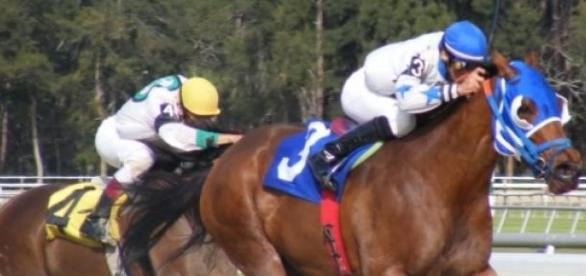 Racehorses and jockeys taking part in an event