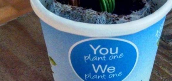 No Dia da Terra plante uma árvore