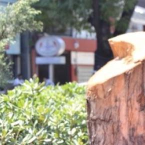 Uno de los 855 árboles talados en Río Mixcoac