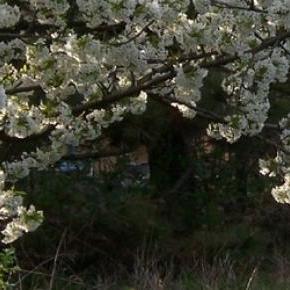 Itt a tavasz, jönnek a káros napsugarak!