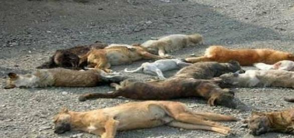 Dog slaughter in Iran
