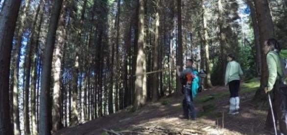 Bosque da Cabreira é local de pedestrianismo