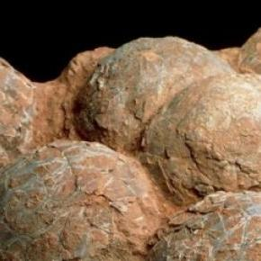 Des oeufs de dinosaures trouvés en Chine.